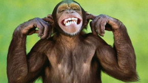 Maymunların  güldüren kedi, köpek oyunları