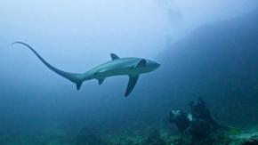 Antalya'da 5 Metrelik Köpek Balığı